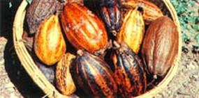 Eliminación de olores en la industria del cacao